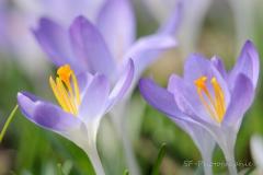 2012-03-18_13-52_0003_Alling_Garten