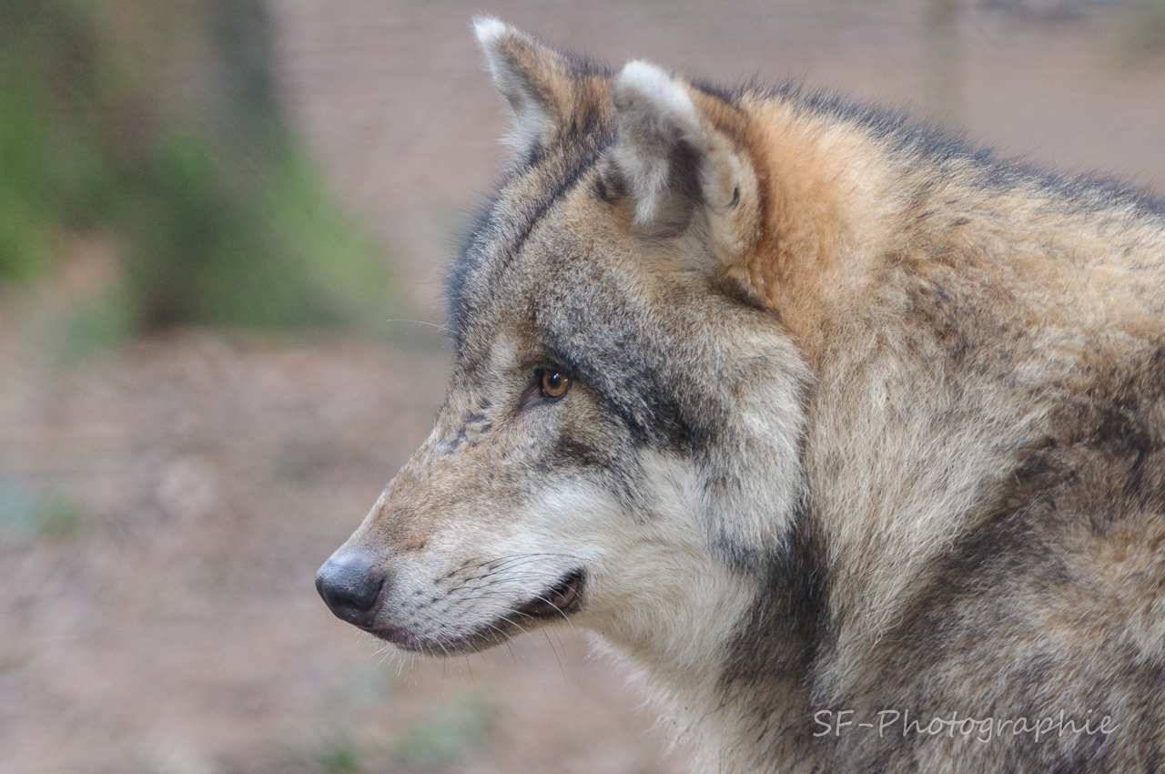 2013-12-21_12-21_0032_Poing_Wildpark