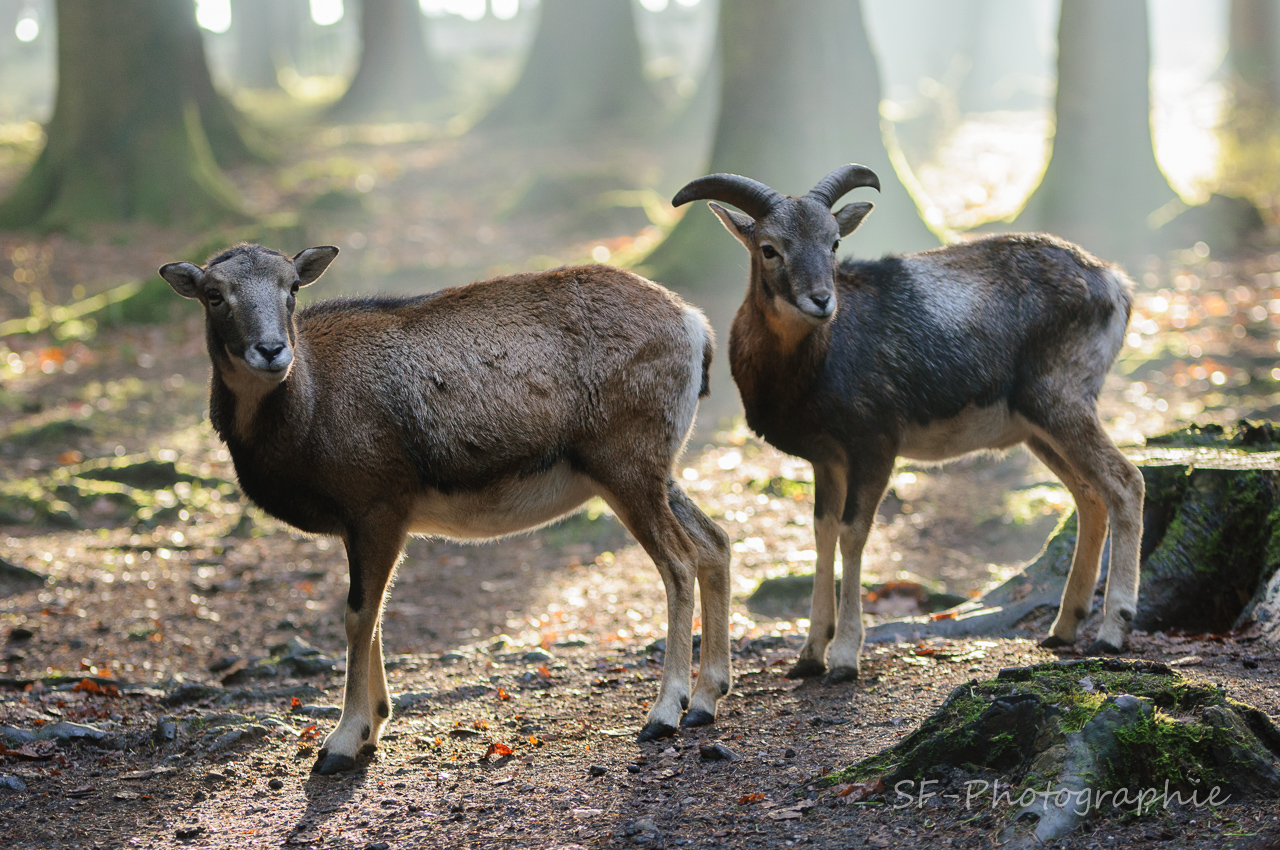 2013-12-21_13-45_0107_Poing_Wildpark