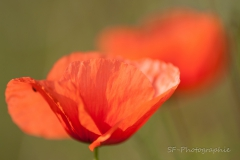 2013-07-14_18-30_0019_Alling_Wildblumen