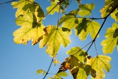 2013-10-13_11-15_0007_Alling_Moos