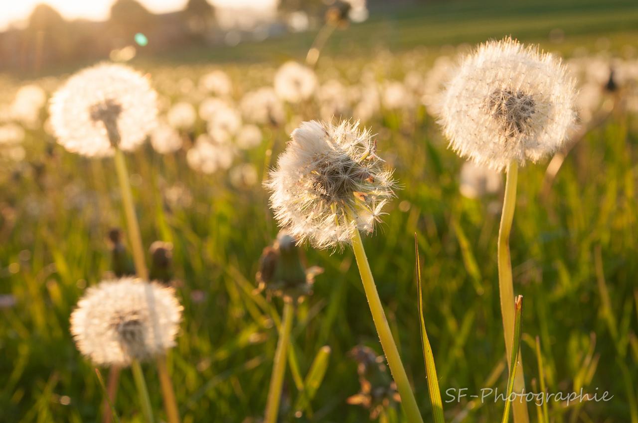 2014-05-20_19-31_0025_Ruegen_D90