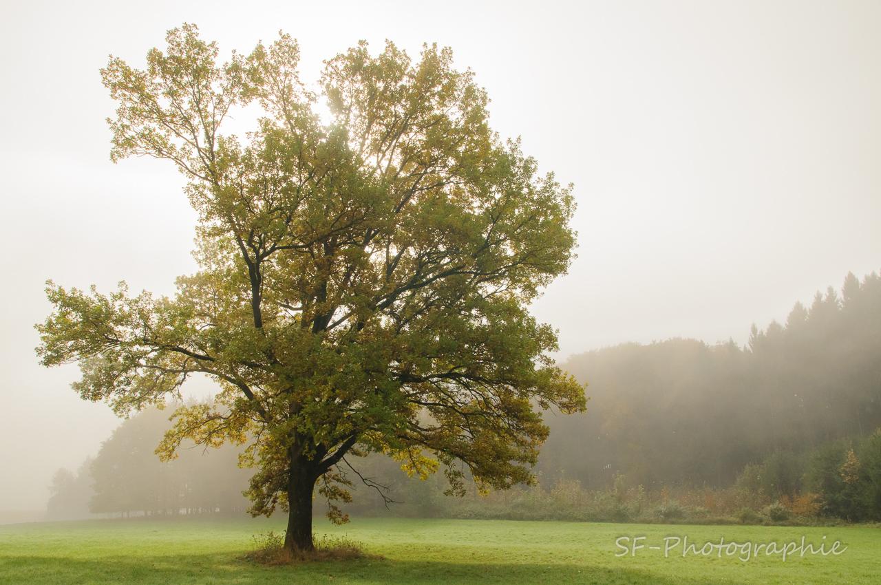 2014-10-12_10-43_0009_Alling_Germansberg