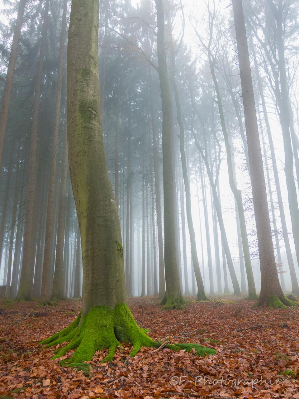 2014-11-23_15-11_0016_Alling_Germansberg