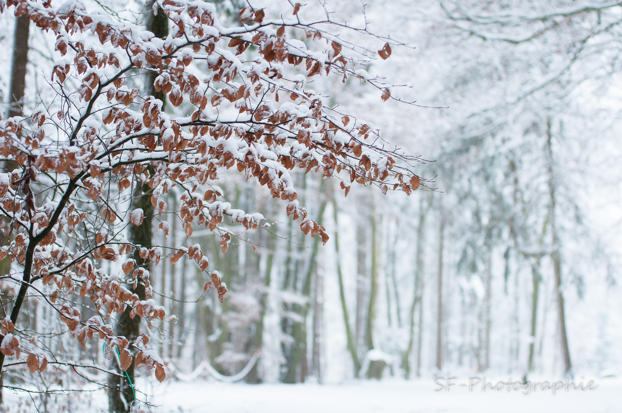 2014-12-27_15-12_0026_Alling_Moos