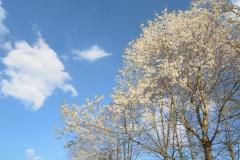 2020-04-12_16-23_0047_Alling_Blüten